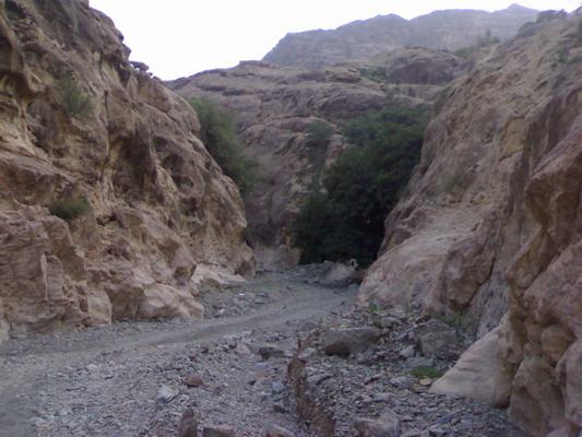 عندما تتنوع الطبيعة يكون جمال الطبيعة .. Qahtaan-20060910-1157906074