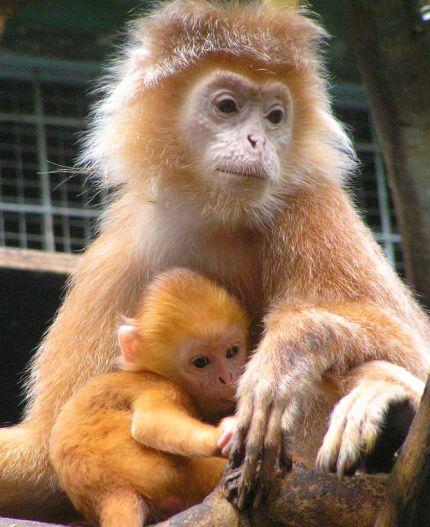 صور حيوانات صغارها